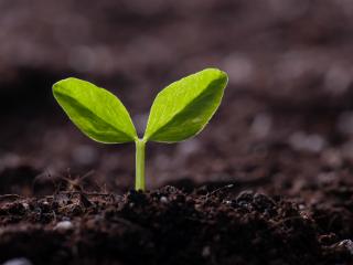 Seedling final