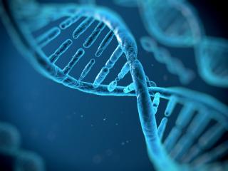 Top x Genetic Variations final