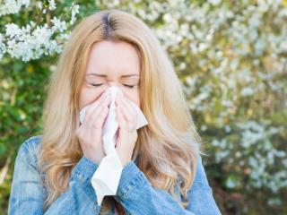 Did Grok Suffer from Seasonal Allergies Final